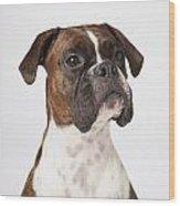 Portrait Of Boxer Dog On White Wood Print