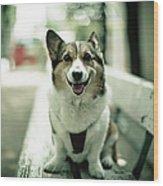 Portrait Of Dog Wood Print