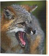 Portrait Of Gray Fox Barking Wood Print