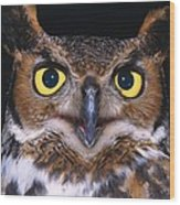 Portrait Of Great Horned Owl Wood Print