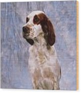 Portrait Of Irish Red And White Setter Wood Print