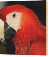 Portrait Of Macaw Wood Print