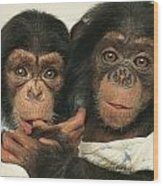 Portrait Of Two Young Laboratory Chimps Wood Print