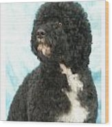 Portugese Water Dog 418 Wood Print