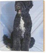 Portugese Water Dog 568 Wood Print