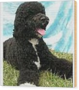 Portugese Water Dog 768 Wood Print