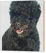 Portugese Water Dog 966 Wood Print