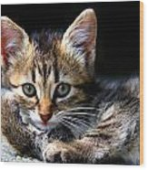 Posing Kitty Wood Print