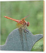 Posing Red Dragonfly Wood Print
