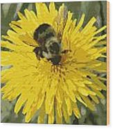 Posterized Bumble Bee Wood Print