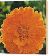 Pot Marigold  Wood Print