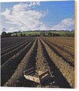 Potato Field, Ireland Wood Print
