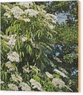 Potchen's Cascade Wood Print
