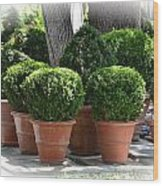Potted Topiary Garden Wood Print