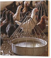 Poultry Wood Print