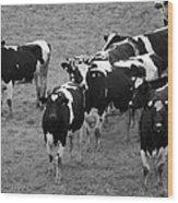 Pourquoi Pas Les Vache Wood Print