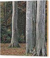 Powerscourt Woods,co Wood Print