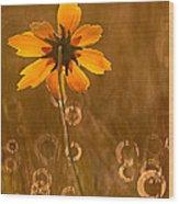 Prairie Coreopsis And Dewdrops Wood Print