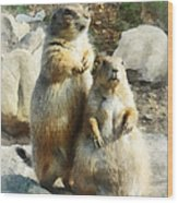 Prairie Dog Formal Portrait Wood Print