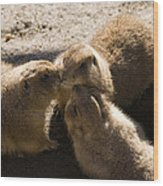 Prairie Dog Gossip Session Wood Print