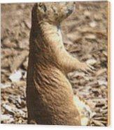 Prairie Dog Profile Wood Print