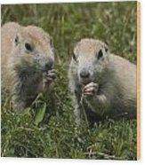 Prairie Dogs Wood Print