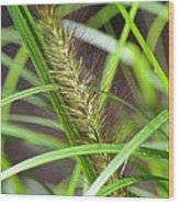 Prairie Dropseed Wood Print