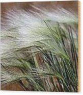 Prairie Grass, Badlands National Park Wood Print