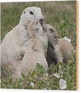 Prairie Kiss Wood Print