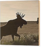 Prairie Moose Wood Print