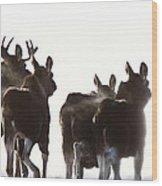 Prairie Moose Saskatchewan Wood Print
