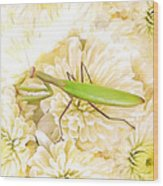 Praying Mantis On A Flower Boquet Wood Print