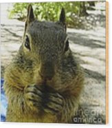 Praying Nuts Wood Print by DJ Laughlin