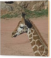 Precious Baby Giraffe Wood Print by Donna Parlow