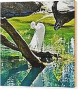 Preening Watercolor Wood Print