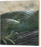 Prehensil Tailed Skink Wood Print