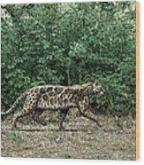 Prehistoric Cat, Artwork Wood Print