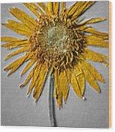 Pressed Sunshine Flower Wood Print
