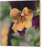 Prettiest Pansy Wood Print