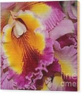 Pretty And Colorful Orchids Wood Print