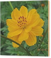 Pretty And Lovely In Yellow Wood Print