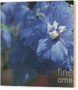 Pretty Blue Delphinia Wood Print