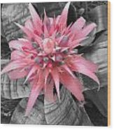Pretty Bromeliad Wood Print