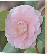 Pretty Camellia Wood Print