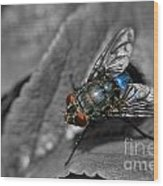 Pretty Fly For A Fly Guy Wood Print