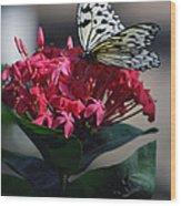 Pretty On Pink Wood Print