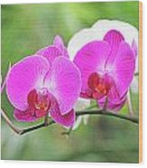 Pretty Orchids All In A Row Wood Print