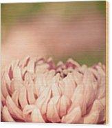 Pretty Pastels Wood Print