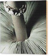 Pretty Petticoat Wood Print