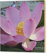 Pretty Pink Lotus Wood Print